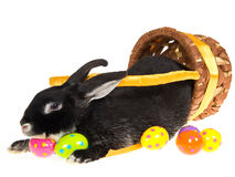 Black bunny inside easter basket Stock Photos