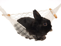 Black bunny inside white hammock Stock Photography