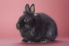 Black bunny isolated Stock Photos