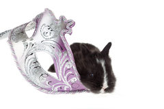 Black bunny and a Venetian carnival mask Royalty Free Stock Photography