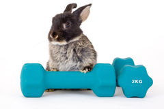 Black bunny and a weight. Isolated Stock Photos
