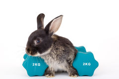 Black bunny and a weight Stock Photo