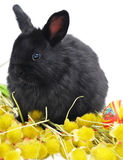 Black bunny on yellow plants Stock Photo