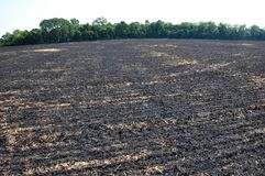 Black burned sturgeon and remnants of grain harvesting. On the grain field, black burned stubble and remnants after harvest Stock Photography