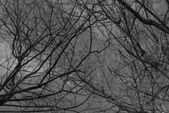 Black bush branches under the grey cloudy sky. Silhouettes of the winter forest on cemetery Stock Photography