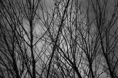 Black bush branches under the grey cloudy sky. Silhouettes of the winter forest on cemetery Royalty Free Stock Photos