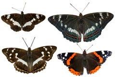 Black butterflies Royalty Free Stock Photos