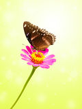 Black butterfly on flower with green background Stock Photography