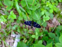 Black butterfly over green grass and plants