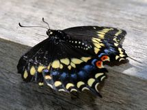 Resting Butterfly Royalty Free Stock Images