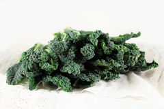 Black cabbage, italian kale Stock Image