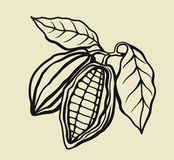 Black cacao beans Royalty Free Stock Image