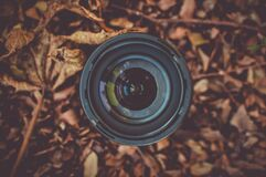 Black Camera Lens on Brown Dried Leaf Stock Photography
