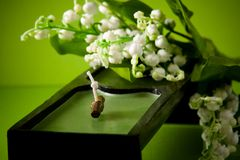 Black candle with white flowers on green Stock Photos