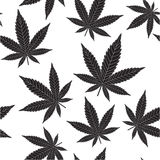 Black cannabis Stock Image