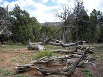Black Canyon of the Gunnison Colorado Stock Photo