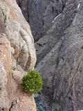Black canyon with tree Stock Image