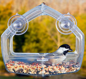 Black capped chickadee on feeding tray Royalty Free Stock Photo