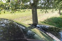 Black Car Accident hit the tree. On the road stock images