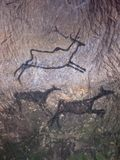 Black carbon paint of deer on sandstone wall, prehistoric picture Stock Photos