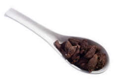 Black cardamom on a spoon Stock Photography