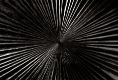 Black carved wood with radial shape texture Stock Photography