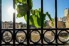 Black cast iron fence gate with green vine leaves in front of ancient greek ruin, sunlight beam and sky background Stock Photos