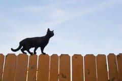 Black cat. Walking on fence Stock Photo