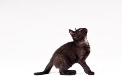Black cat. Isolated over white stock image