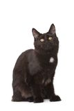 Black cat. On white background stock images