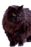 Black cat. Royalty Free Stock Photos