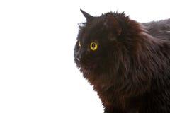 Black cat. Royalty Free Stock Photography