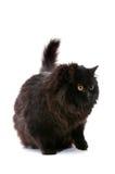 Black cat. Royalty Free Stock Photo