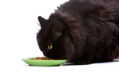 Black cat. Stock Image