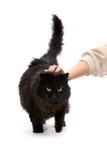 Black cat. Stock Photos
