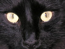 Black cat. CLose up of black cat's eyes Stock Photos
