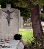 Black cat. On a grave in a graveyard royalty free stock photo