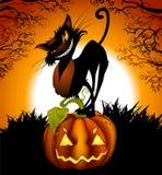 Black cat. Cat on Pumpkin. Halloween. Moon Royalty Free Stock Images