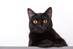 Free Black Cat Stock Photography - 13235742