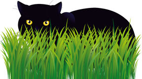 Black cat. The black cat is hidden in a grass. illustration.vecto Royalty Free Stock Photo