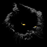 Black cat. A beautiful black cat with shiny fur and a hawk's eye Stock Image