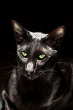 Black cat. With green eyes stock photo