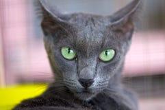 Black cat. Looking at me Stock Photos