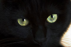 Black cat. The green Eyes of a black cat royalty free stock photos