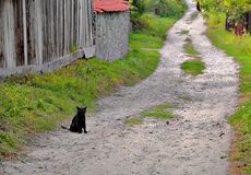 Black cat. Sits on the road side and looking at us Royalty Free Stock Photo