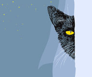 Black cat. Peering out the window - vector illustration Stock Photo