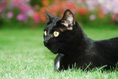 Black cat. The black cat in garden royalty free stock photos
