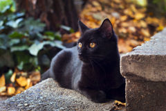 Black cat. With yellow eyes, sitting outside Royalty Free Stock Photos