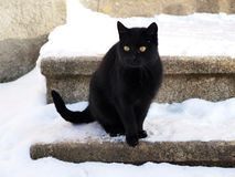 Black cat. A black cat in the snow on the stairs stock photos