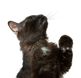 Black Cat. Playing in white background Stock Photo